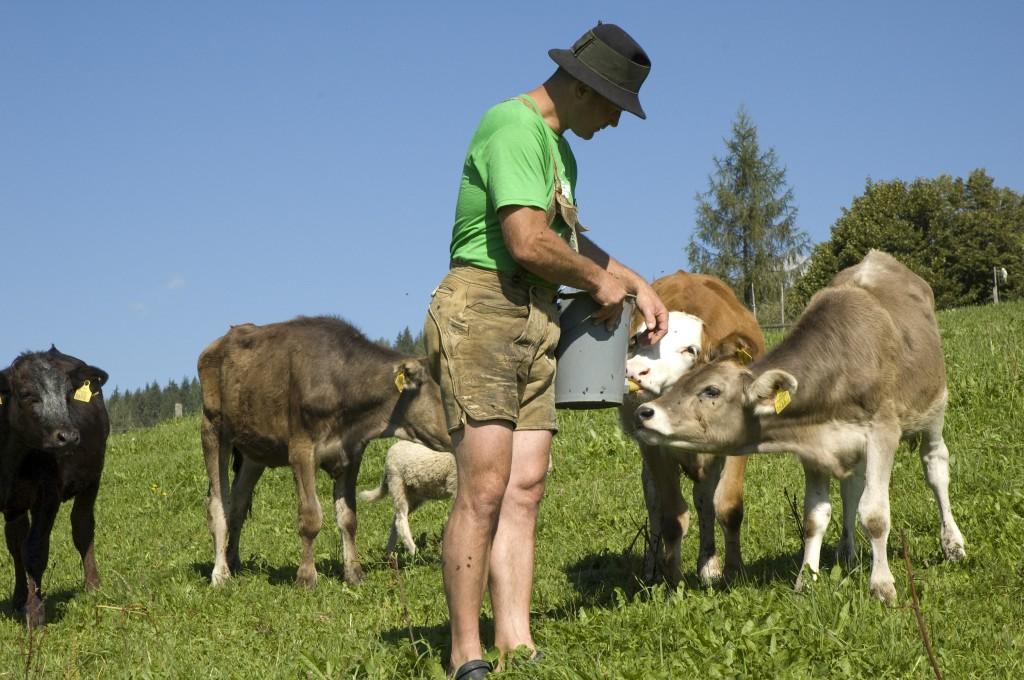 Bio Urlaub in Ramsau am Dachstein